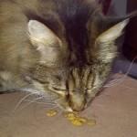Baily cat