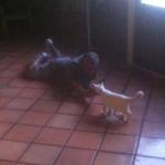 Kittie Playing