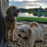 pet-sitting-at-weston-bailey-bella-6