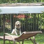 Pet Sitting at Weston Bear jpg