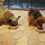 Pet Sitting at Weston Bentley & Carson