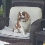 Pet Sitting at Weston Cali jpg