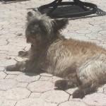 Pet Sitting at Weston Carson