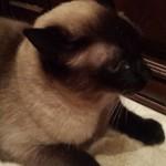 Pet Sitting at Weston Cookie