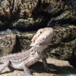 Pet Sitting at Weston Drako