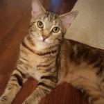 Pet Sitting at Weston Emma Cats 4