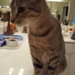 Pet Sitting at Weston Emma Cats 5