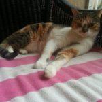 pet-sitting-at-weston-itzie