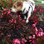 Pet Sitting at Weston Lily 1 - Copy - Copy