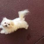 Pet Sitting at Weston Lola
