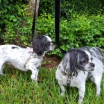 Pet Sitting at Weston Lola & Lucy