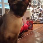 Pet Sitting at Weston Miles Cat