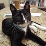 Pet Sitting at Weston Minnie Cat