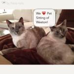 Pet Sitting at Weston Mishmish & Lilu