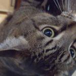 pet-sitting-at-weston-mocha