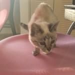 Pet Sitting at Weston Nala - Copy - Copy