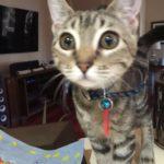 pet-sitting-at-weston-oliver-cat