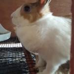 Pet Sitting at Weston Paws