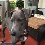Pet Sitting at Weston Pepper 1