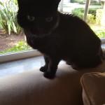 Pet Sitting at Weston Riley Cat 2