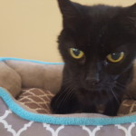 Pet Sitting at Weston Riley Cat 4