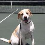 Pet Sitting at Weston Romeo Play Tennis