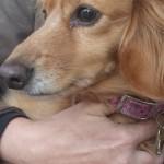 Pet Sitting at Weston Roxxi 2