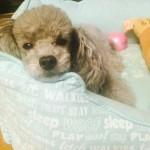Pet Sitting at Weston - Rui2