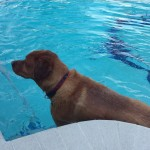 Pet Sitting at Weston Russell Pool