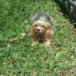 Pet Sitting at Weston Sparkey & Bella
