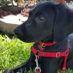 Pet Sitting at Weston Tanner 4