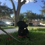 Pet Sitting at Weston Tanner 5
