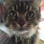 Pet Sitting at Weston Teeba 3