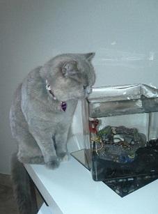 grey cat and fish
