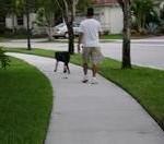 walking_a_dog